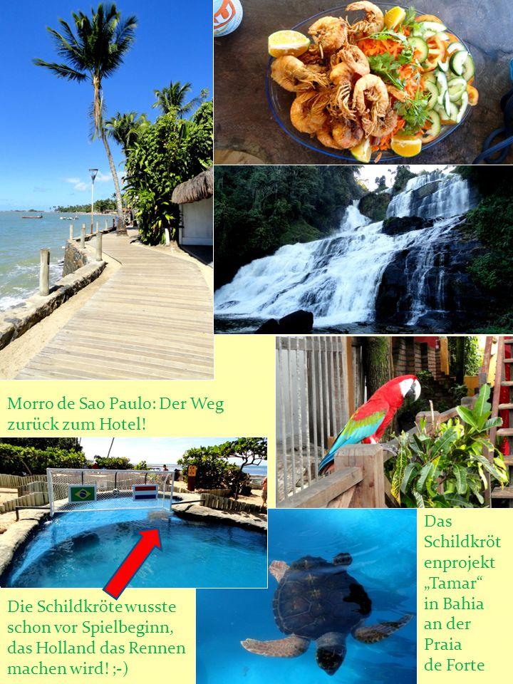 """Das Schildkröt enprojekt """"Tamar"""" in Bahia an der Praia de Forte Morro de Sao Paulo: Der Weg zurück zum Hotel! Die Schildkröte wusste schon vor Spielbe"""