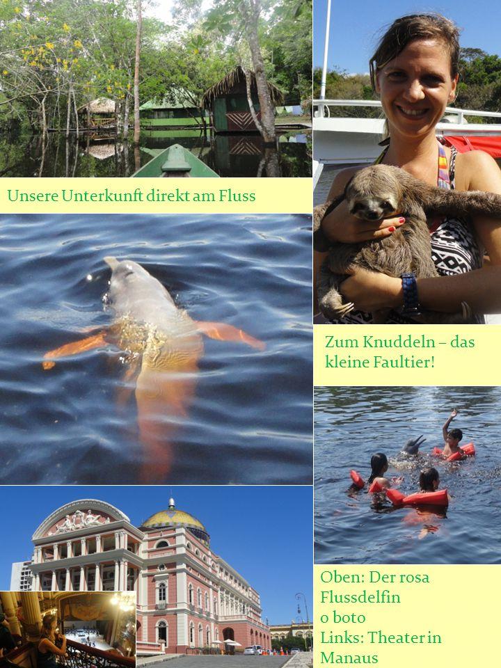 Zum Knuddeln – das kleine Faultier! Unsere Unterkunft direkt am Fluss Oben: Der rosa Flussdelfin o boto Links: Theater in Manaus