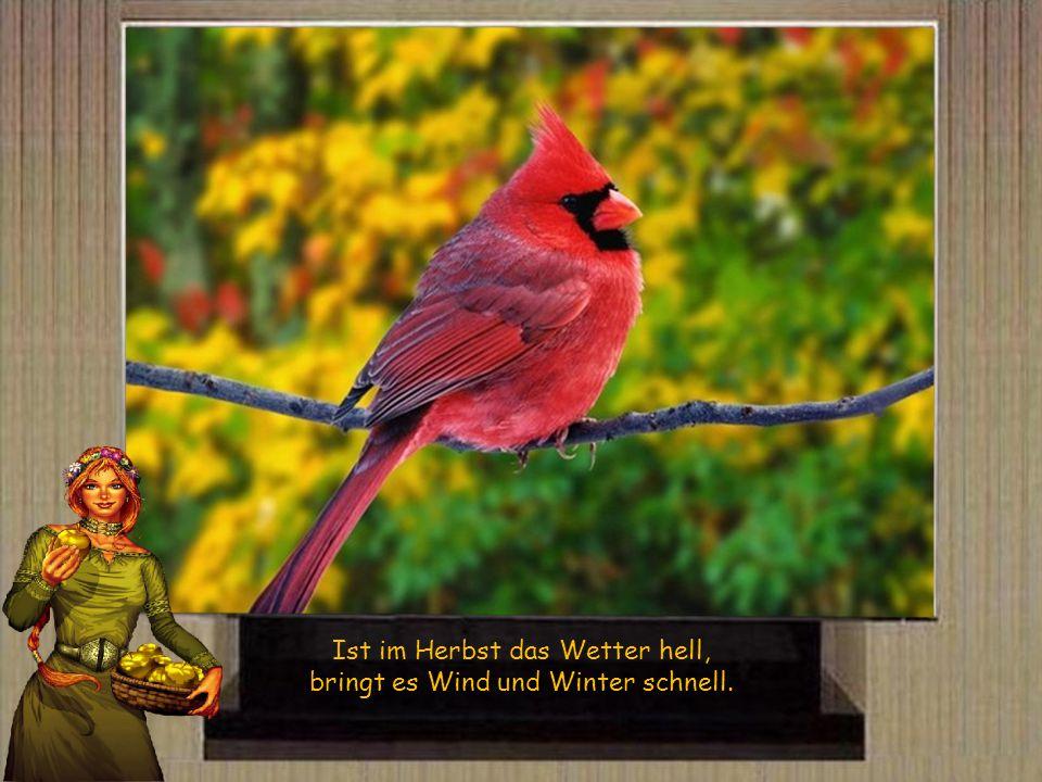 Ist der Herbst warm und fein, kommt ein scharfer Winter rein.