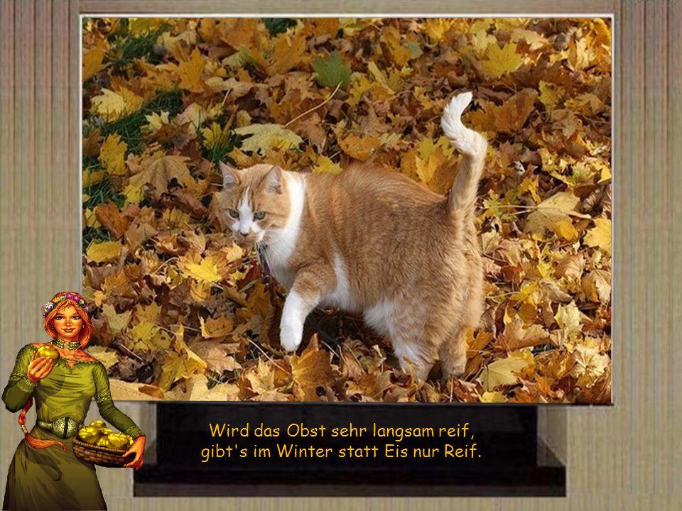 Ist im Herbst das Wetter hell, bringt es Wind und Winter schnell.