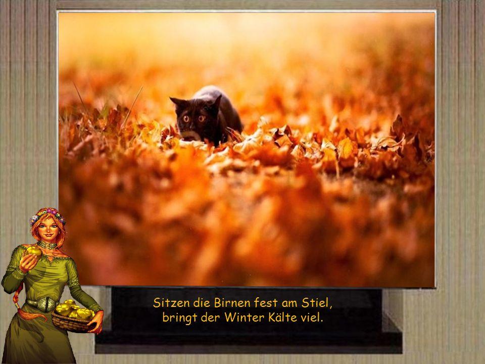 Wird das Obst sehr langsam reif, gibt s im Winter statt Eis nur Reif.