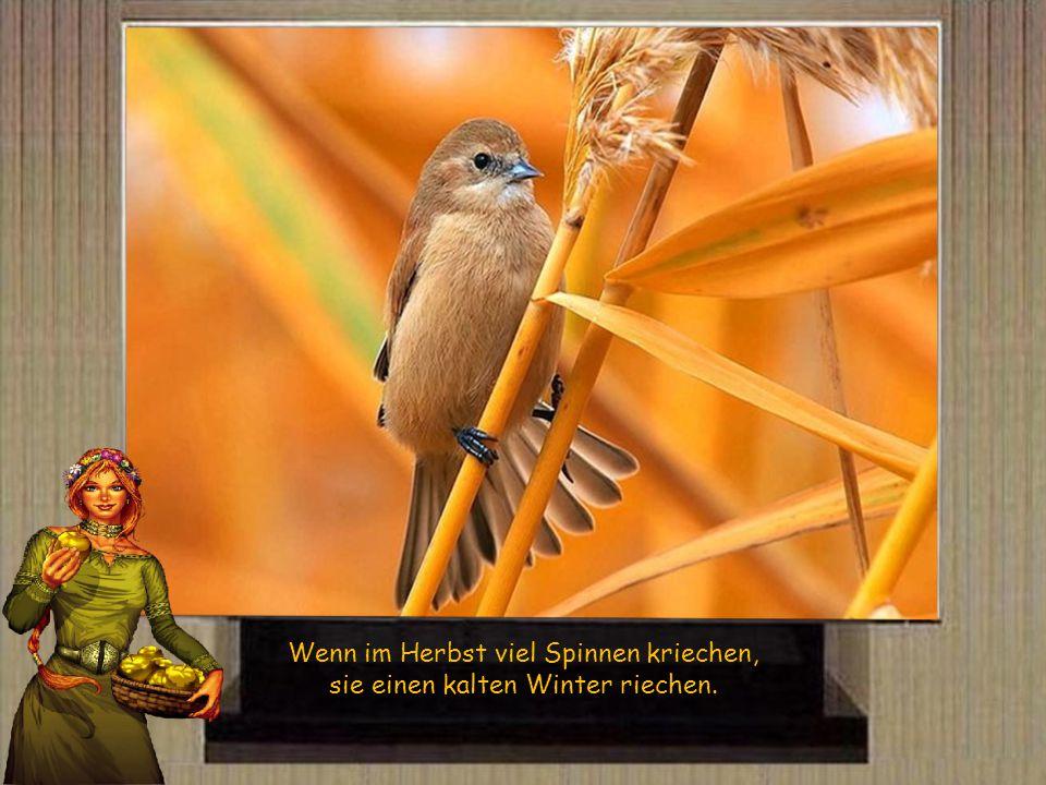 Wenn die Eichen viel Früchte tragen, wird ein langer Winter tagen.