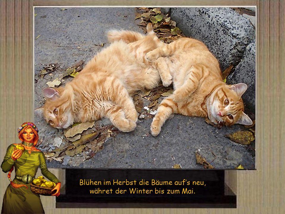 Viel Donner im Herbst – viel Schnee im Winter.