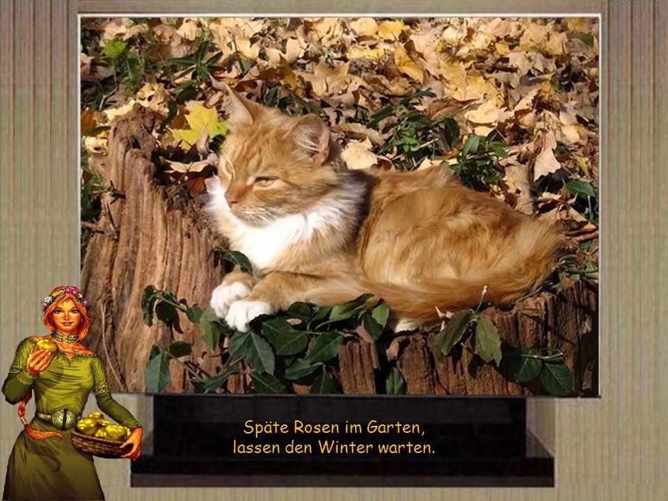 Konnte man den Herbst loben, wird der Winter stürmen und toben.
