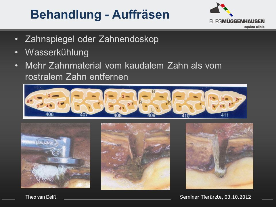 Theo van Delft Seminar Tierärzte, 03.10.2012 Behandlung - Auffräsen Zahnspiegel oder Zahnendoskop Wasserkühlung Mehr Zahnmaterial vom kaudalem Zahn als vom rostralem Zahn entfernen