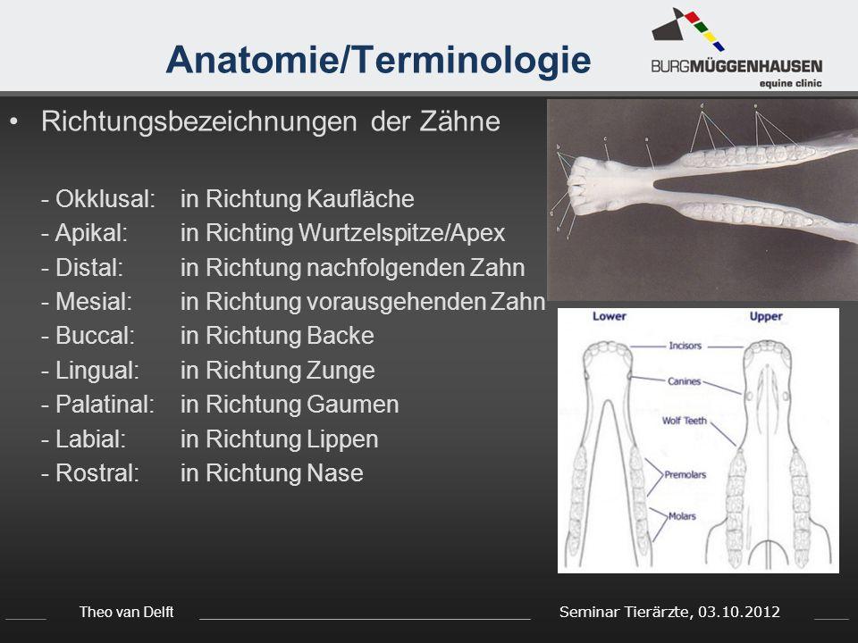 Theo van Delft Seminar Tierärzte, 03.10.2012 Anatomie/Terminologie Richtungsbezeichnungen der Zähne - Okklusal:in Richtung Kaufläche - Apikal: in Rich