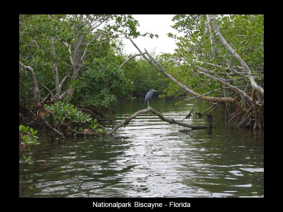 Der blaue Fluss - Neu Caledonien