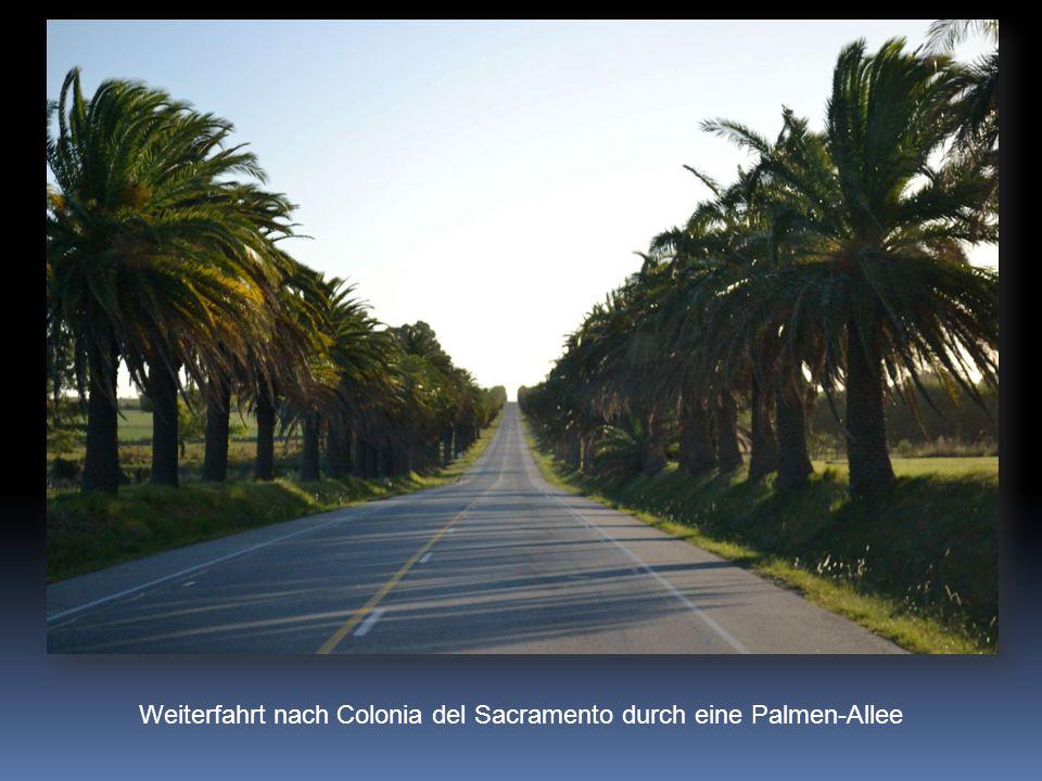 Weiterfahrt nach Colonia del Sacramento durch eine Palmen-Allee