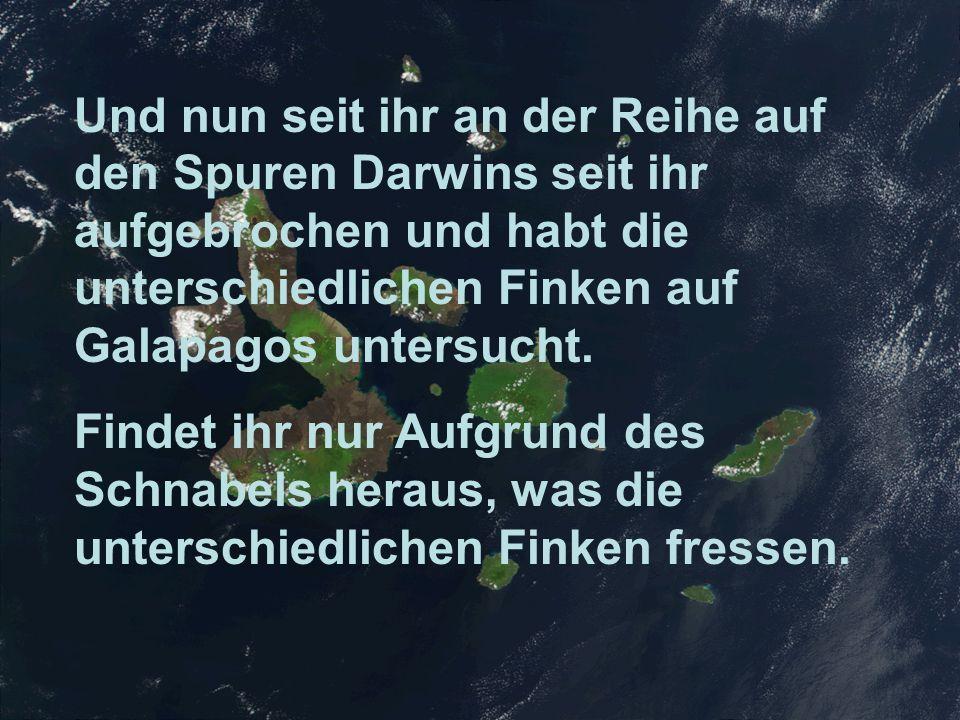 Und nun seit ihr an der Reihe auf den Spuren Darwins seit ihr aufgebrochen und habt die unterschiedlichen Finken auf Galapagos untersucht. Findet ihr