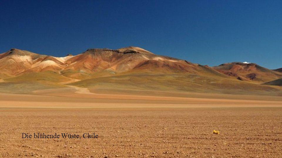 Diese linsenförmigen Wolkenanomalien bilden sich, wenn feuchte Luft über einen Berg hinweg zieht.