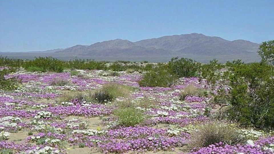 Die blühende Wüste, Chile