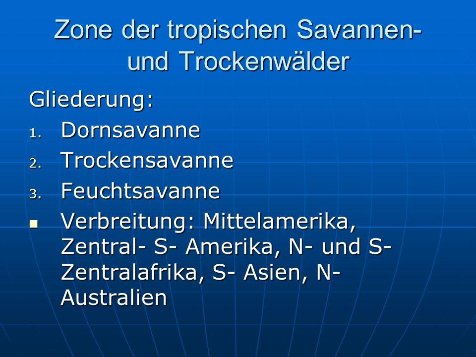 Zone der tropischen Savannen- und Trockenwälder Gliederung: 1. Dornsavanne 2. Trockensavanne 3. Feuchtsavanne Verbreitung: Mittelamerika, Zentral- S-
