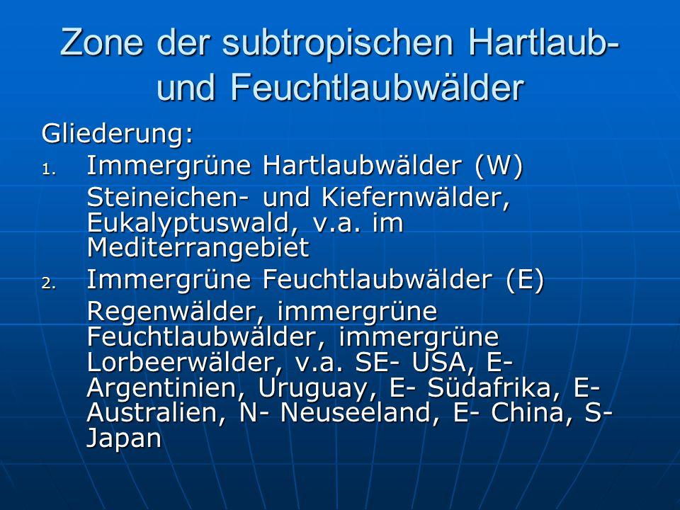 Zone der subtropischen Hartlaub- und Feuchtlaubwälder Gliederung: 1. Immergrüne Hartlaubwälder (W) Steineichen- und Kiefernwälder, Eukalyptuswald, v.a