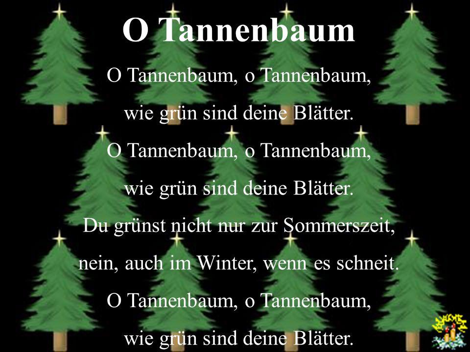 O Tannenbaum O Tannenbaum, o wie grün sind deine Blätter. O Tannenbaum, o wie grün sind deine Blätter. Du grünst nicht nur zur Sommerszeit, nein, auch