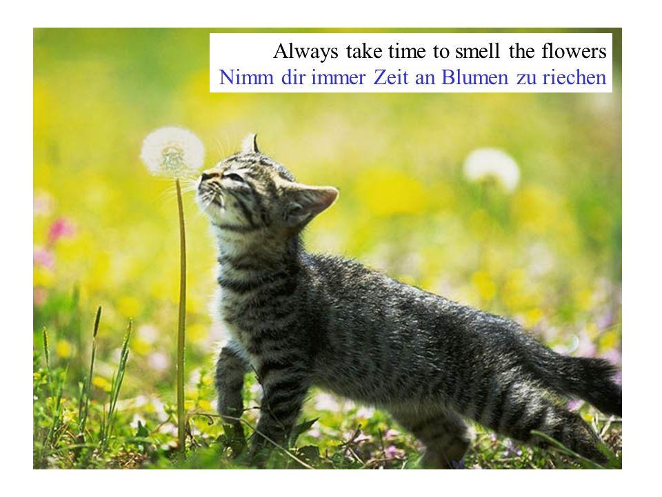 Always take time to smell the flowers Nimm dir immer Zeit an Blumen zu riechen