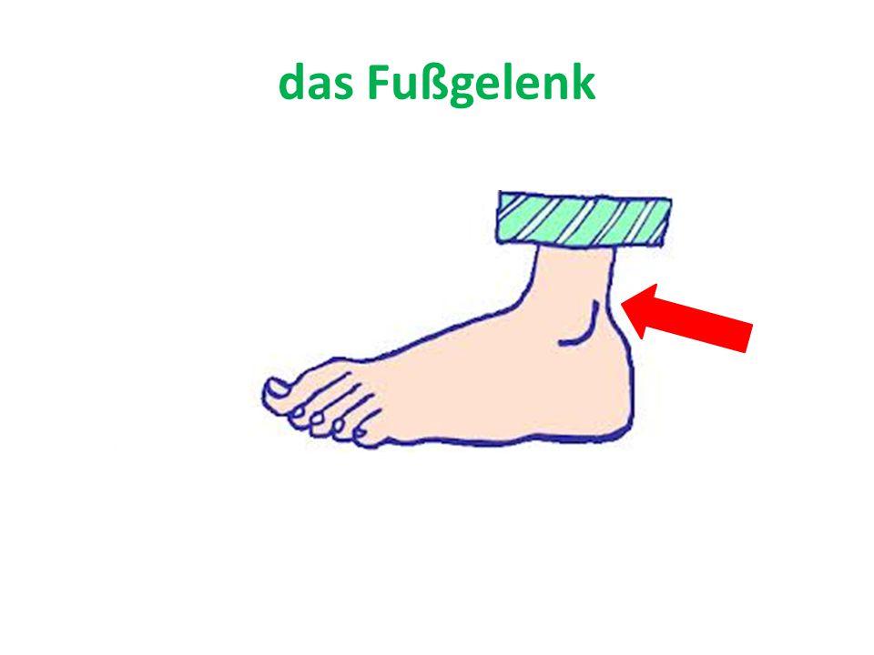 das Fußgelenk