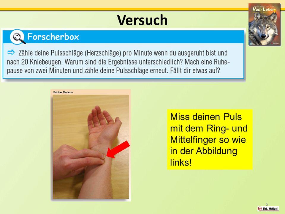 Versuch Miss deinen Puls mit dem Ring- und Mittelfinger so wie in der Abbildung links! 6
