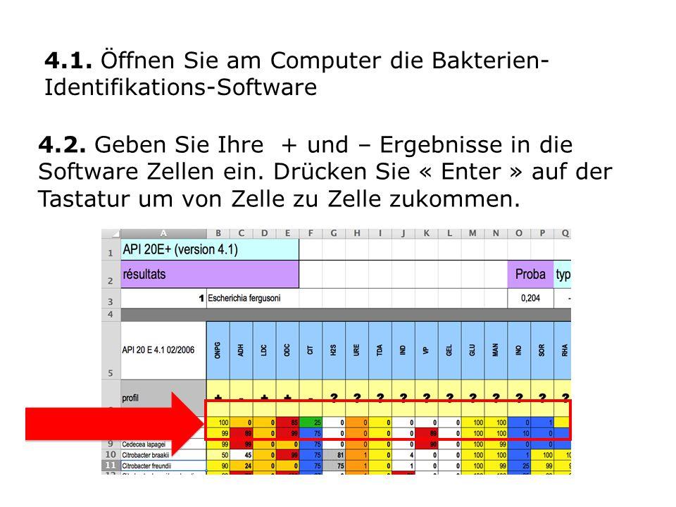 4.2.Geben Sie Ihre + und – Ergebnisse in die Software Zellen ein.