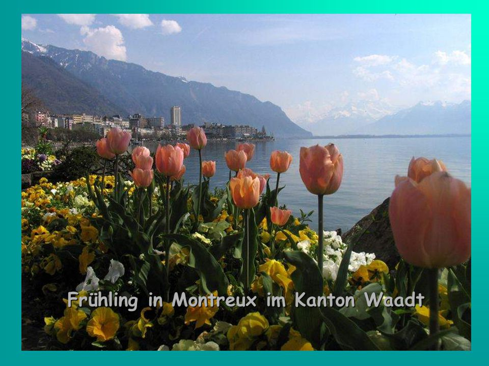 Frühling in Montreux im Kanton Waadt