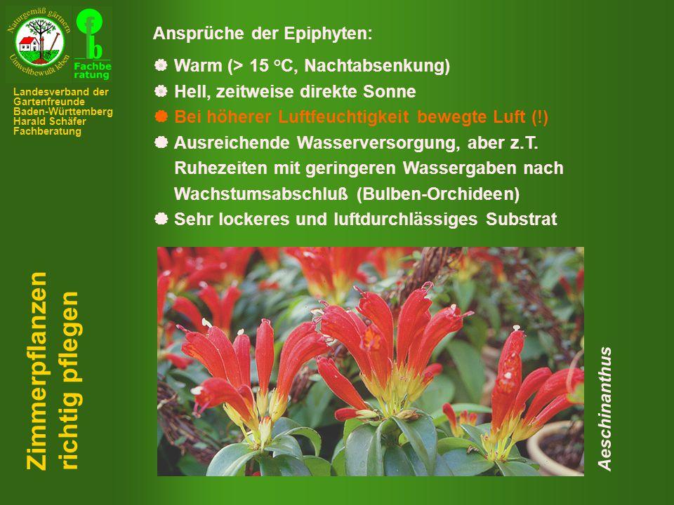 Ansprüche der Epiphyten:  Warm (> 15 °C, Nachtabsenkung)  Hell, zeitweise direkte Sonne  Bei höherer Luftfeuchtigkeit bewegte Luft (!)  Ausreichende Wasserversorgung, aber z.T.
