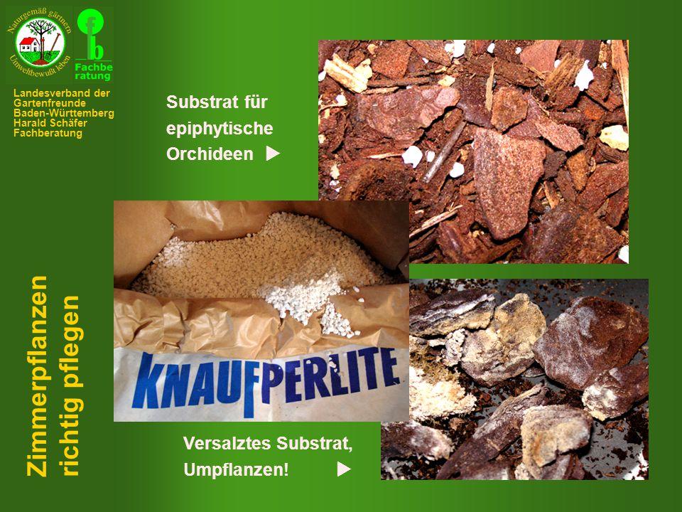 Substrat für epiphytische Orchideen  Versalztes Substrat, Umpflanzen.