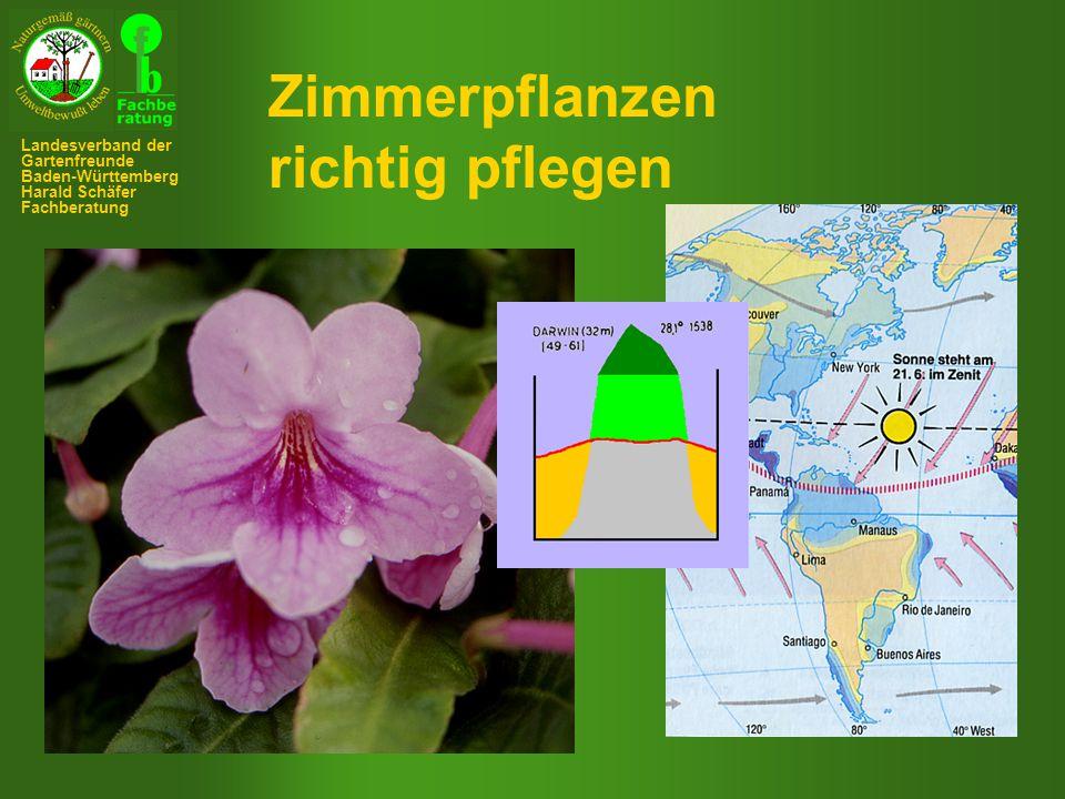 Zimmerpflanzen richtig pflegen Landesverband der Gartenfreunde Baden-Württemberg Harald Schäfer Fachberatung