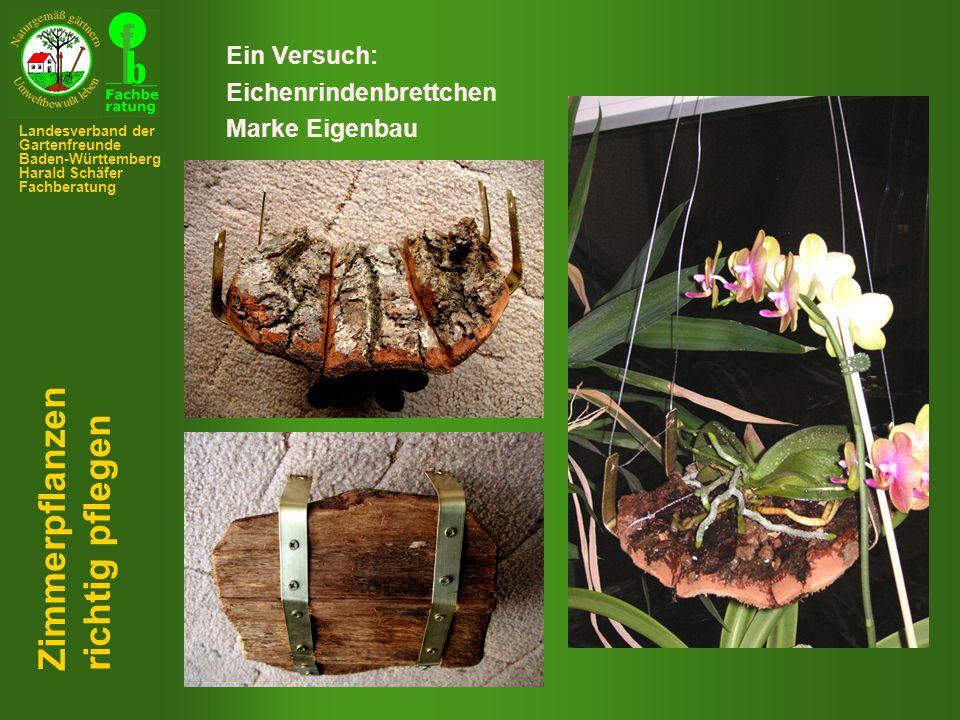 Ein Versuch: Eichenrindenbrettchen Marke Eigenbau Zimmerpflanzen richtig pflegen Landesverband der Gartenfreunde Baden-Württemberg Harald Schäfer Fachberatung