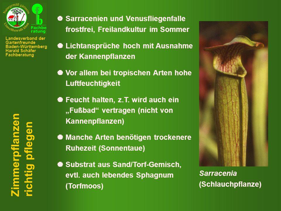  Sarracenien und Venusfliegenfalle frostfrei, Freilandkultur im Sommer  Lichtansprüche hoch mit Ausnahme der Kannenpflanzen  Vor allem bei tropischen Arten hohe Luftfeuchtigkeit  Feucht halten, z.T.