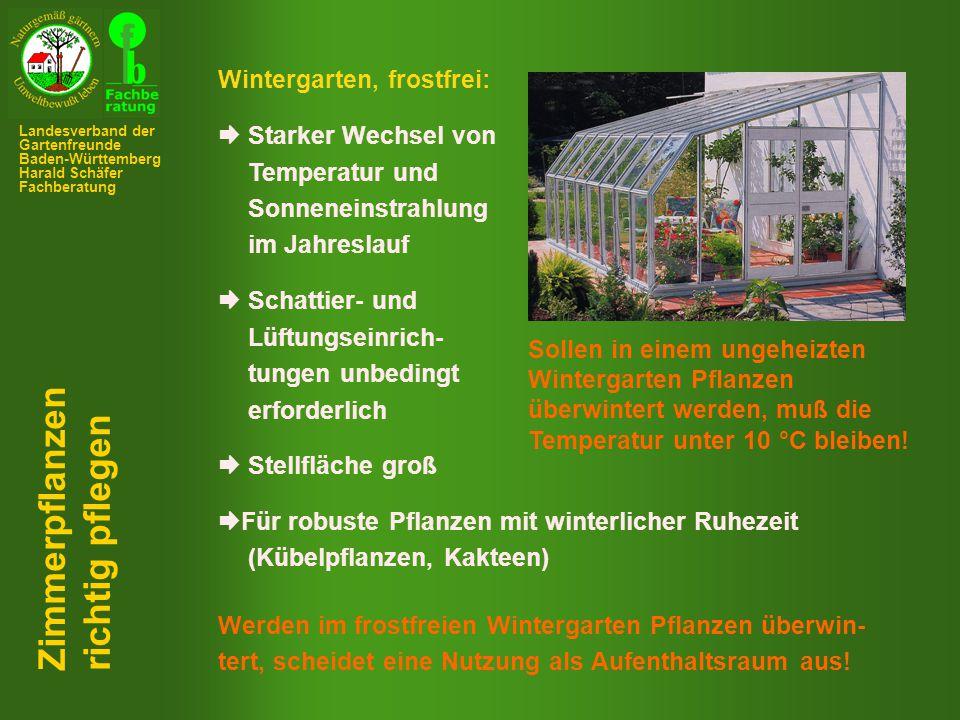Phalaënopsis (Nachtfalterorchidee, Malaienblume) Zimmerpflanzen richtig pflegen Landesverband der Gartenfreunde Baden-Württemberg Harald Schäfer Fachberatung
