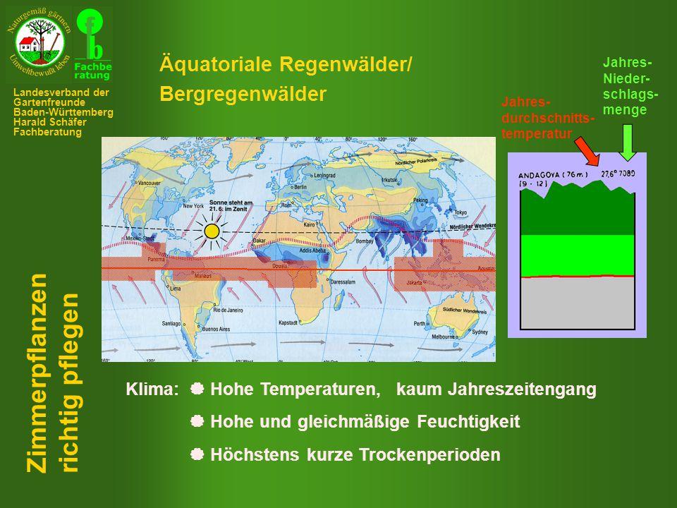 Besondere Anpassungsmechanismen:  Blätter/Sprosse als Wasserspeicher (fleischig)  Abwerfen der Blätter  Wahl spezieller Standorte z.B.