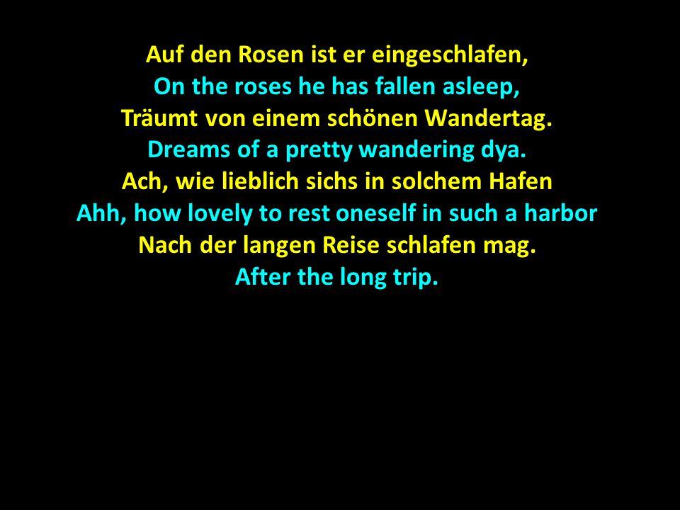 Auf den Rosen ist er eingeschlafen, On the roses he has fallen asleep, Träumt von einem schönen Wandertag.
