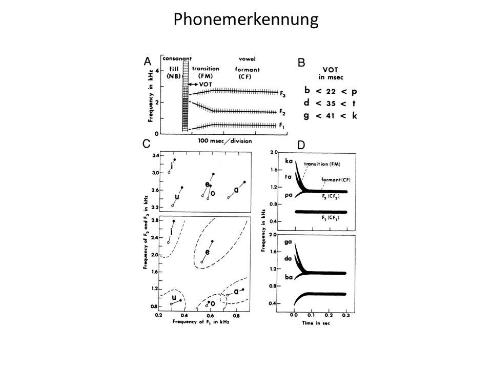 Kohortenmodell II Inputrepräsentation: distinktive Merkmale Alignment: Wort-Onset Weitere Unterschiede zu Kohortenmodell I Kohorten sind größer, da gewisses Maß an Nichtübereinstimmung toleriert wird.