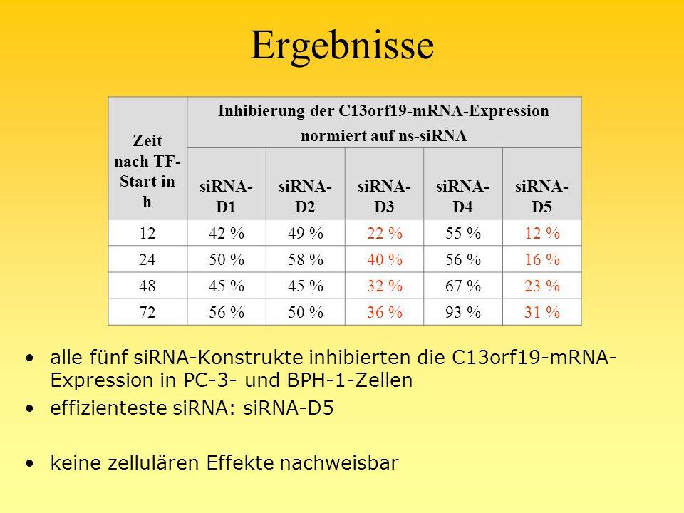 Ergebnisse alle fünf siRNA-Konstrukte inhibierten die C13orf19-mRNA- Expression in PC-3- und BPH-1-Zellen effizienteste siRNA: siRNA-D5 keine zellulären Effekte nachweisbar Zeit nach TF- Start in h Inhibierung der C13orf19-mRNA-Expression normiert auf ns-siRNA siRNA- D1 siRNA- D2 siRNA- D3 siRNA- D4 siRNA- D5 1242 %49 %22 %55 %12 % 2450 %58 %40 %56 %16 % 4845 % 32 %67 %23 % 7256 %50 %36 %93 %31 %