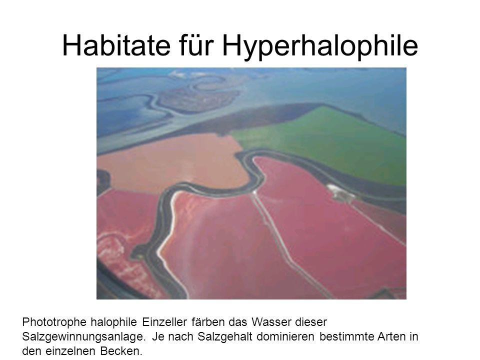 Habitate für Hyperhalophile Phototrophe halophile Einzeller färben das Wasser dieser Salzgewinnungsanlage. Je nach Salzgehalt dominieren bestimmte Art