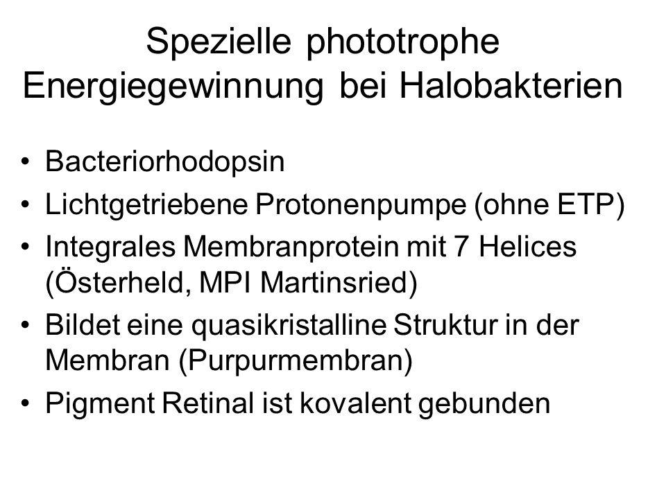 Spezielle phototrophe Energiegewinnung bei Halobakterien Bacteriorhodopsin Lichtgetriebene Protonenpumpe (ohne ETP) Integrales Membranprotein mit 7 He