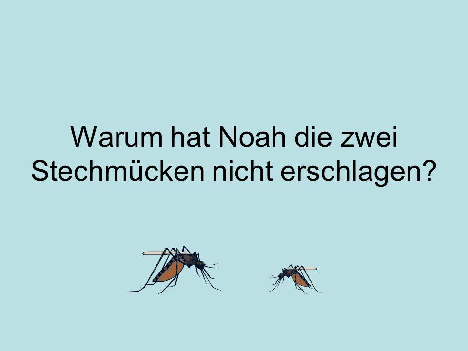 Warum hat Noah die zwei Stechmücken nicht erschlagen?