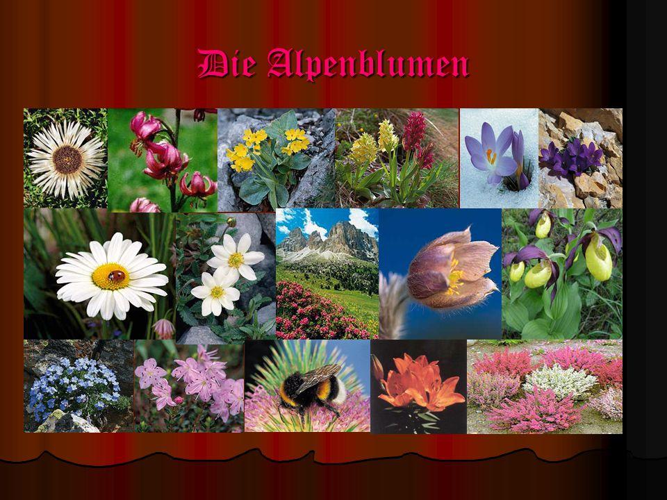 Die Alpenblumen