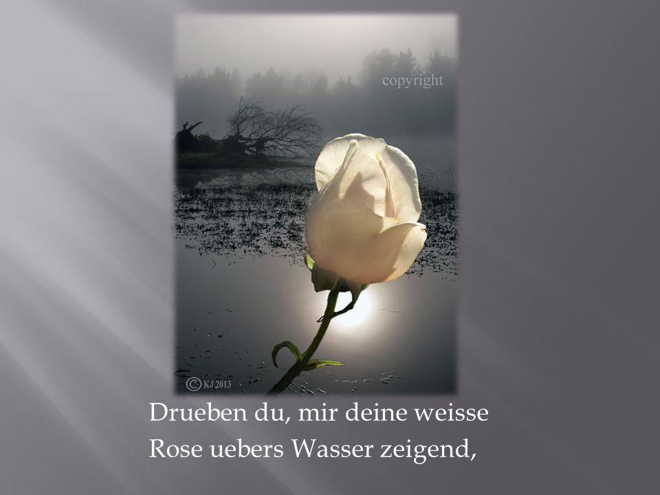 Drueben du, mir deine weisse Rose uebers Wasser zeigend,