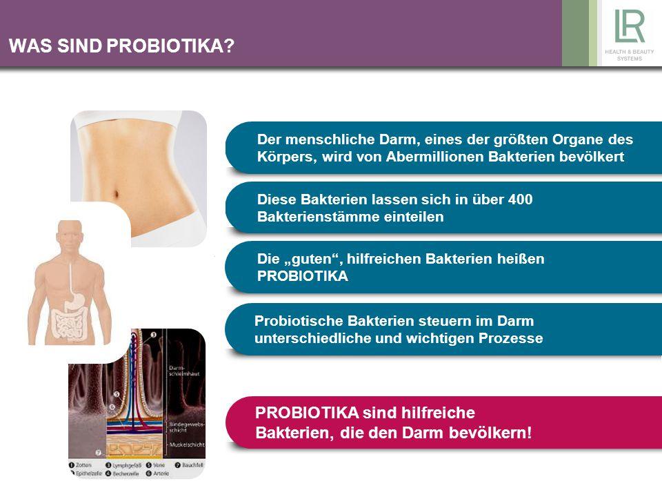 Der menschliche Darm, eines der größten Organe des Körpers, wird von Abermillionen Bakterien bevölkert Diese Bakterien lassen sich in über 400 Bakteri