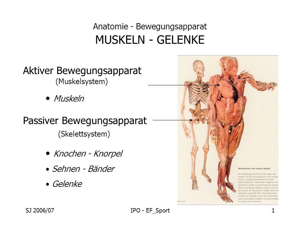 SJ 2006/07IPO - EF_Sport1 Anatomie - Bewegungsapparat MUSKELN - GELENKE Aktiver Bewegungsapparat Passiver Bewegungsapparat Muskeln Knochen - Knorpel S