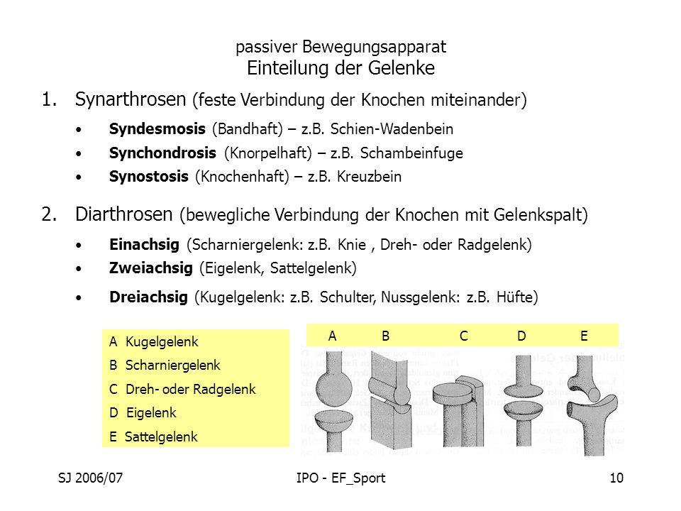 SJ 2006/07IPO - EF_Sport10 passiver Bewegungsapparat Einteilung der Gelenke 1.Synarthrosen (feste Verbindung der Knochen miteinander) Syndesmosis (Ban