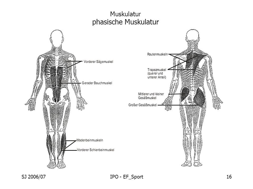 SJ 2006/07IPO - EF_Sport16 Muskulatur phasische Muskulatur