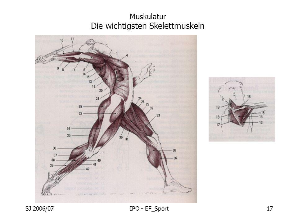 SJ 2006/07IPO - EF_Sport17 Muskulatur Die wichtigsten Skelettmuskeln