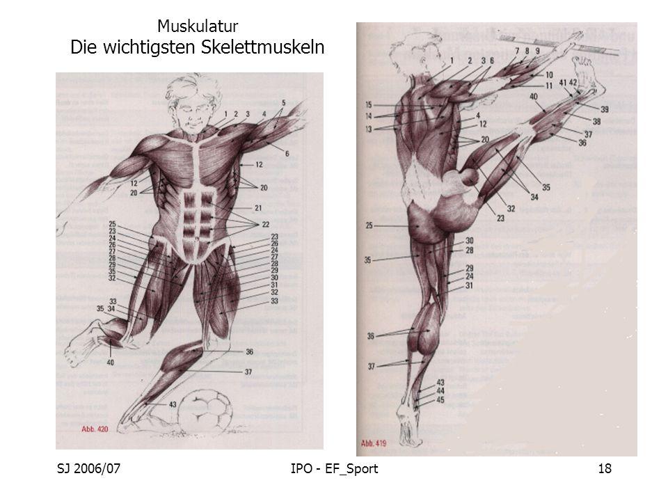 SJ 2006/07IPO - EF_Sport18 Muskulatur Die wichtigsten Skelettmuskeln