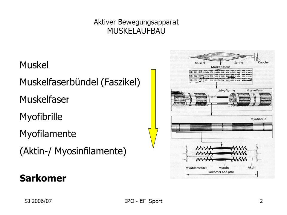 SJ 2006/07IPO - EF_Sport2 Aktiver Bewegungsapparat MUSKELAUFBAU Muskel Muskelfaserbündel (Faszikel) Muskelfaser Myofibrille Myofilamente (Aktin-/ Myos
