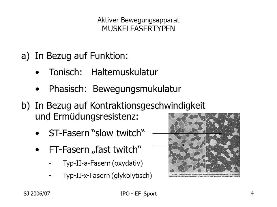 SJ 2006/07IPO - EF_Sport4 Aktiver Bewegungsapparat MUSKELFASERTYPEN a)In Bezug auf Funktion: Tonisch: Haltemuskulatur Phasisch: Bewegungsmukulatur b)I