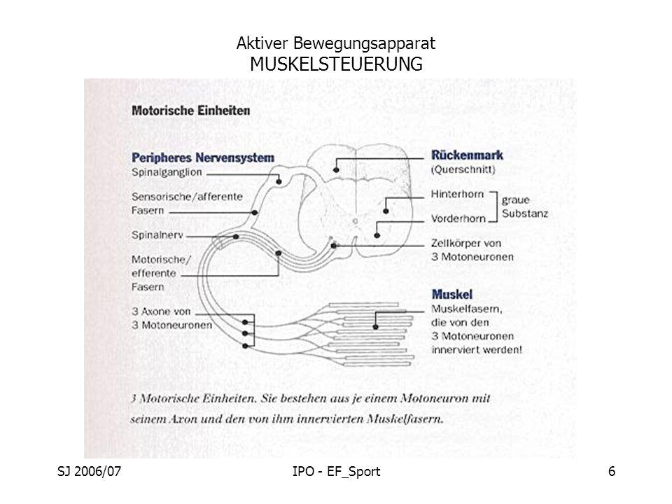 SJ 2006/07IPO - EF_Sport6 Aktiver Bewegungsapparat MUSKELSTEUERUNG