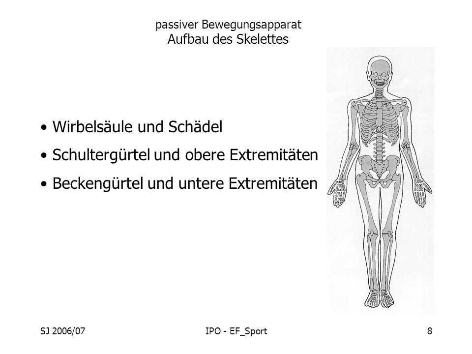 SJ 2006/07IPO - EF_Sport8 passiver Bewegungsapparat Aufbau des Skelettes Wirbelsäule und Schädel Schultergürtel und obere Extremitäten Beckengürtel un