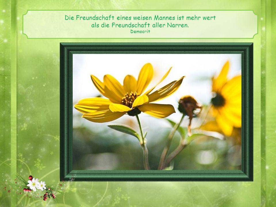 Die Freundschaft eines weisen Mannes ist mehr wert als die Freundschaft aller Narren. Democrit