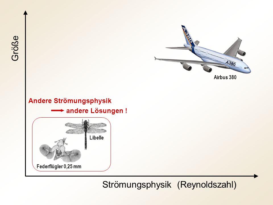 Größe Strömungsphysik (Reynoldszahl) Andere Strömungsphysik andere Lösungen ! Federflügler 0,25 mm Libelle Airbus 380